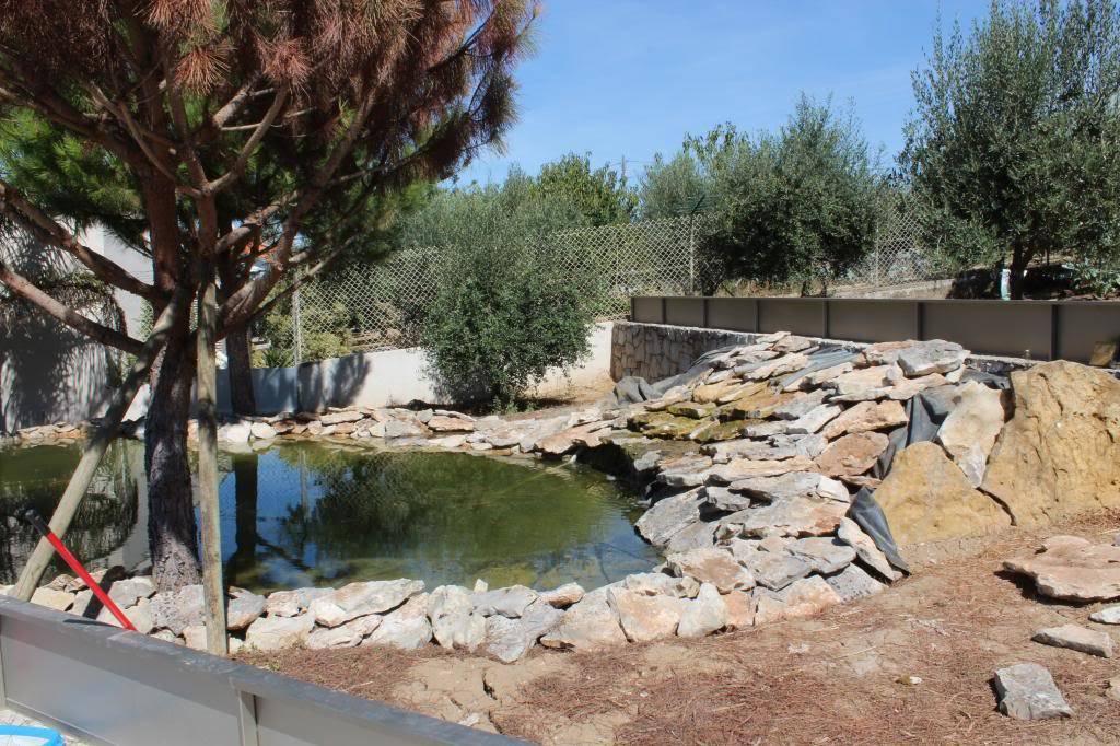 Aquaterrário---->Lago -Graptemys ouachitensis ouachitensis - Página 13 IMG_3882