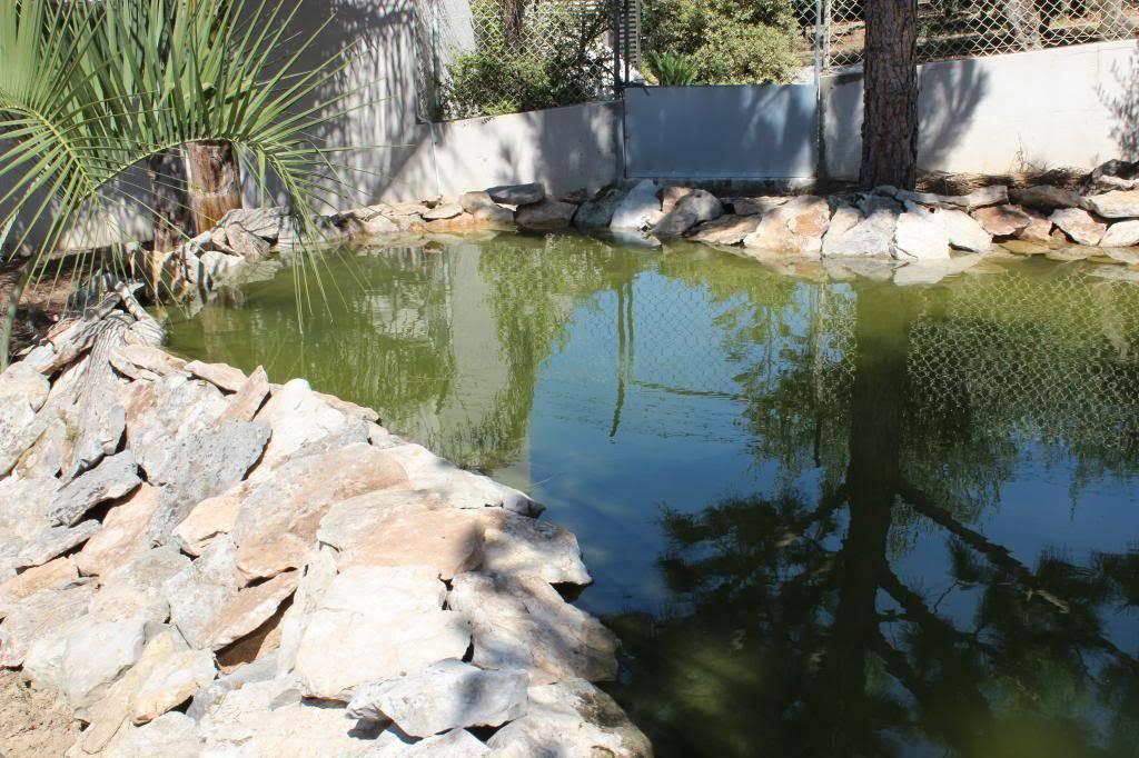 Aquaterrário---->Lago -Graptemys ouachitensis ouachitensis - Página 13 IMG_3888