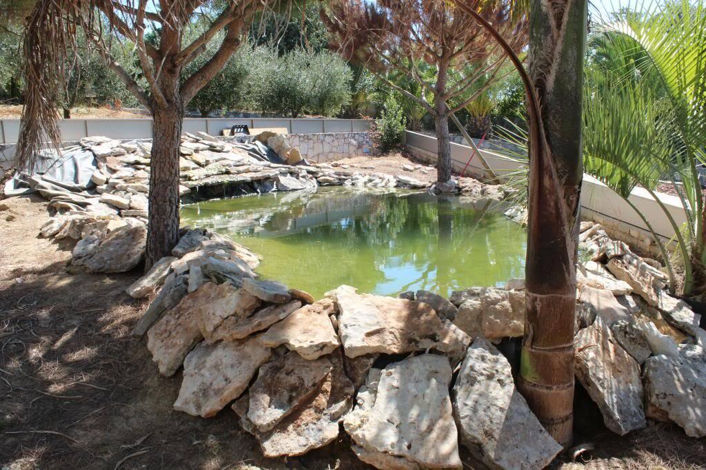 Aquaterrário---->Lago -Graptemys ouachitensis ouachitensis - Página 13 IMG_3889