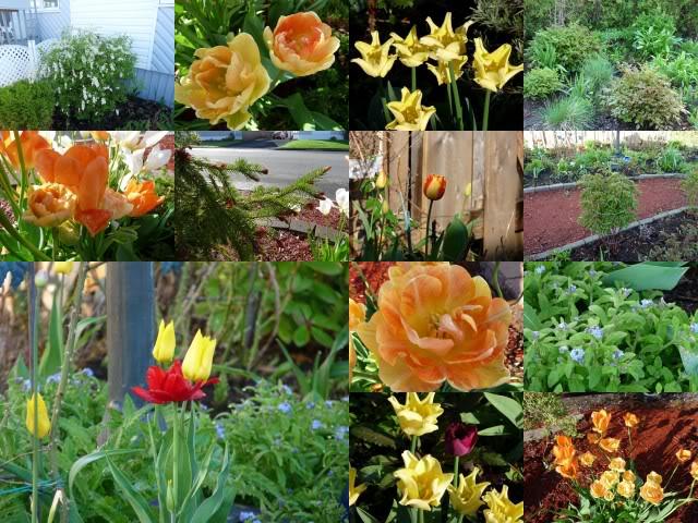 Je vous présente  mon jardin  2011-05-3030mai2011pisyfaitsoleil15degrea7hrs