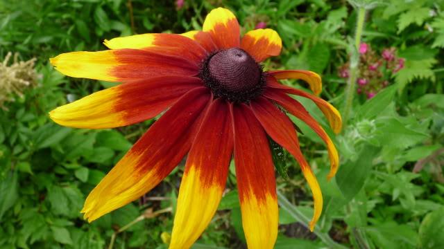 Je vous présente  mon jardin  Juilletle26amvuedensembleduterrain9hrs008