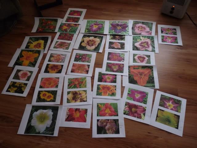Je vous présente  mon jardin  Juilletle27amvuedensembleduterrain9hrs001