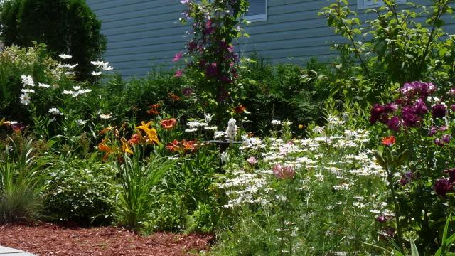 Je vous présente  mon jardin  Juilletle28juilletpmtard023