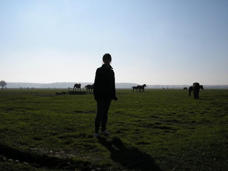 Gredsko polje-Konji PA172929