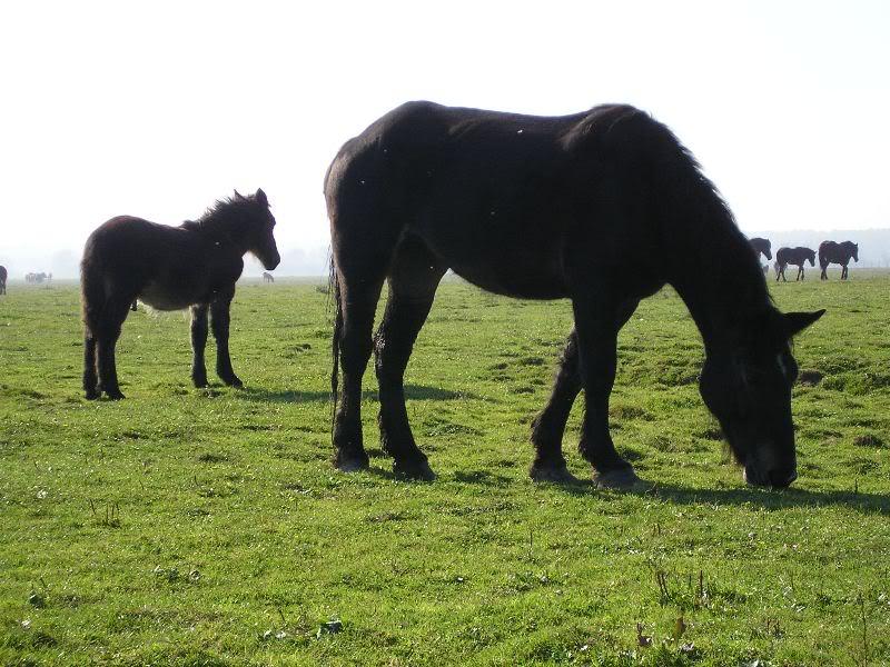 Gredsko polje-Konji PA172938