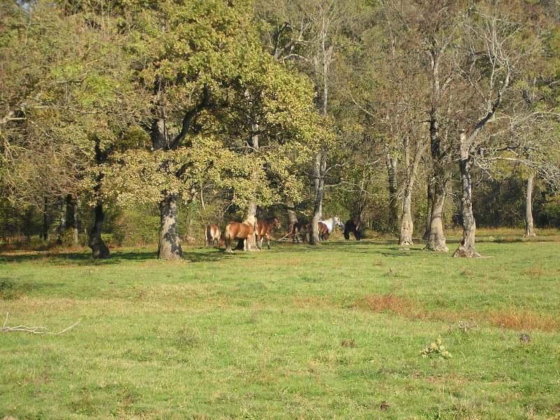 Gredsko polje-Konji PA172944