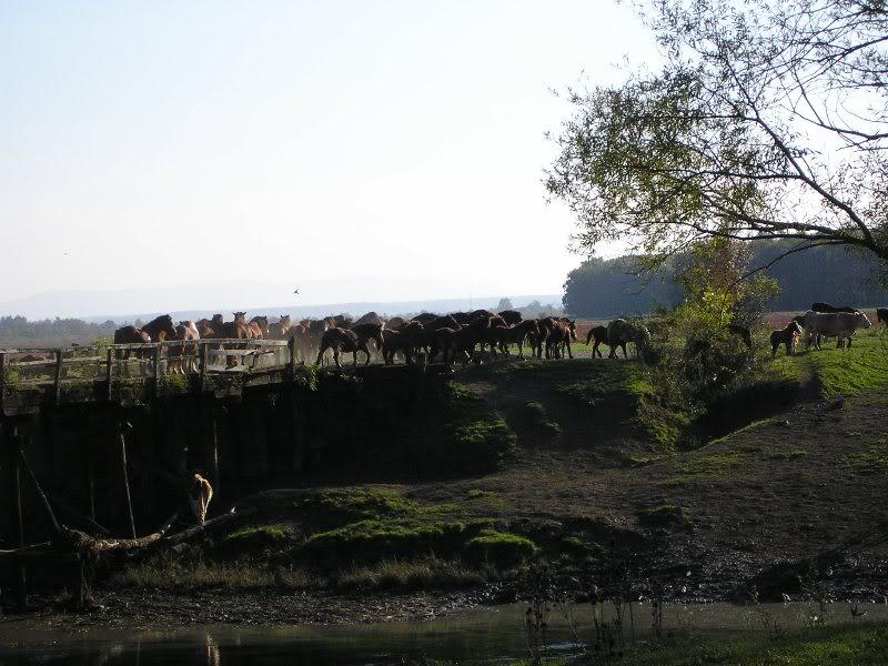 Gredsko polje-Konji PA172976