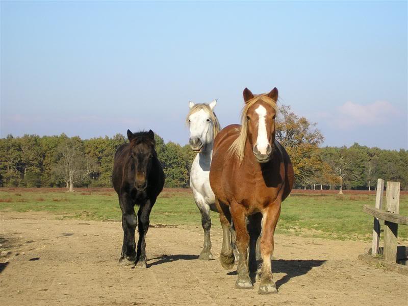 Gredsko polje-Konji PA172982Medium