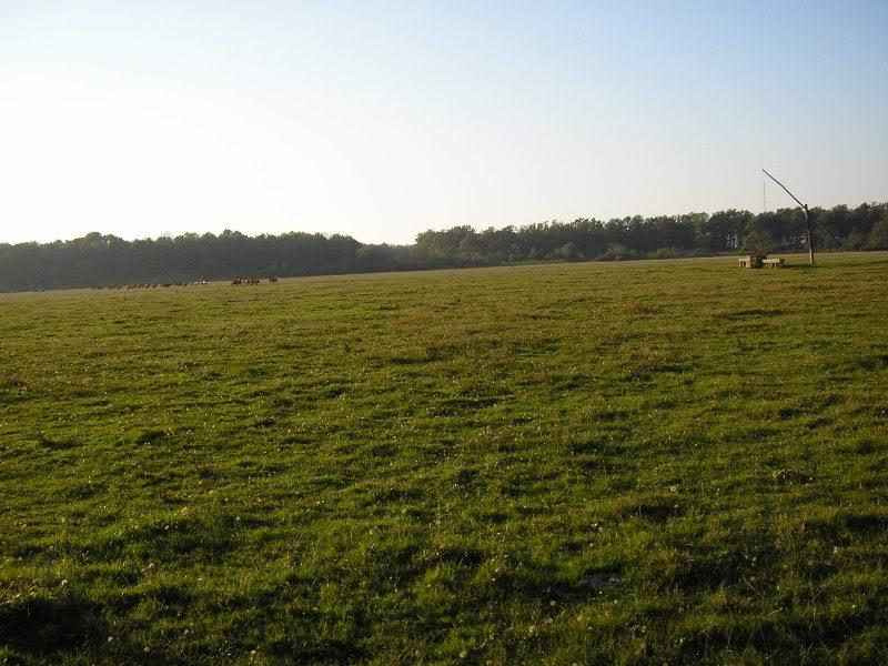 Gredsko polje-Konji PA173003