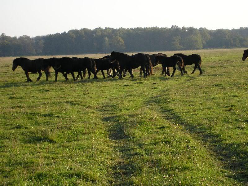 Gredsko polje-Konji PA173010