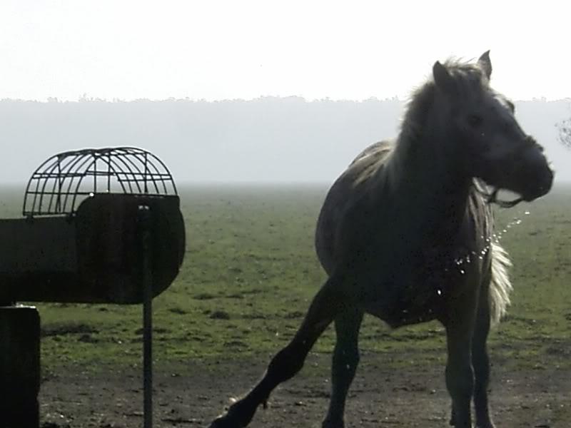Gredsko polje-Konji R0014486