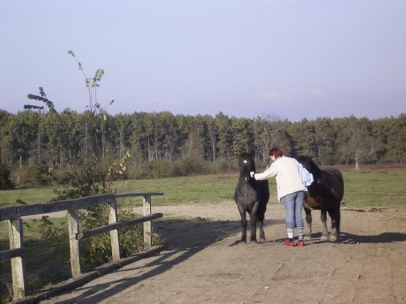Gredsko polje-Konji R0014534