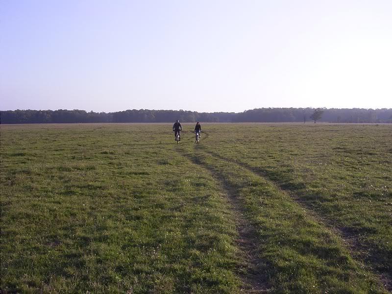 Gredsko polje-Konji R0014542