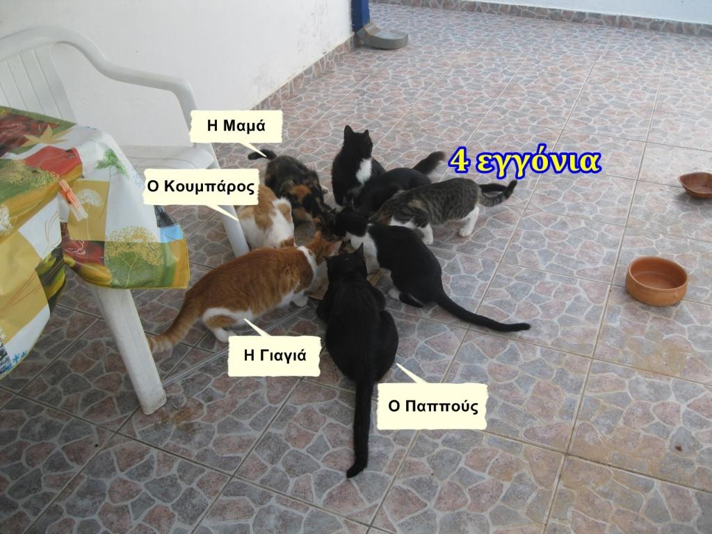 Τα φιλαράκια μας της Σαλαμίνας 926442e2-35f2-444a-84dd-3d6dce31bd2d
