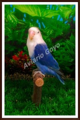 Fischer disponibles Azulcobalto_zpsbfdde7b5