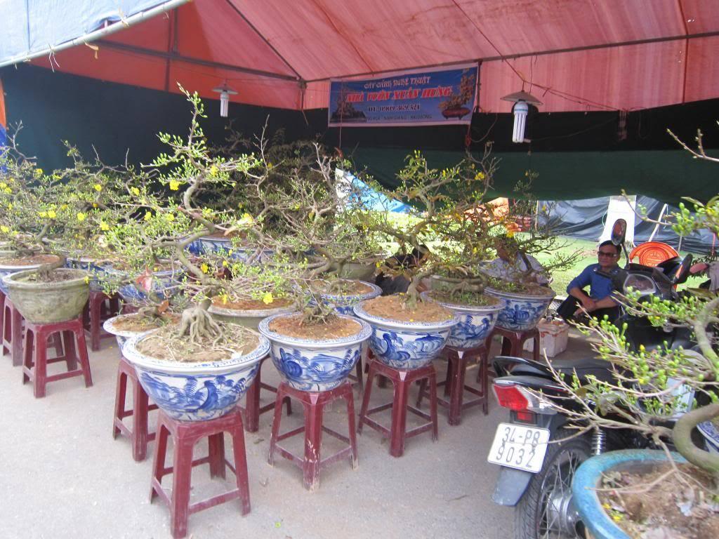 TOPIC Săn ảnh Xuân Qúi Tỵ 2013  IMG_9199_zps7b431ece