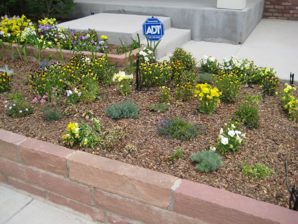 Claudia's home front  Landscaping002