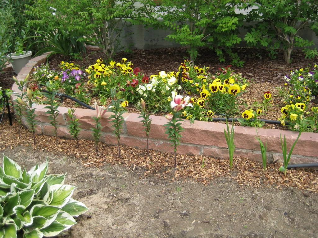 Claudia's home front  Landscaping003