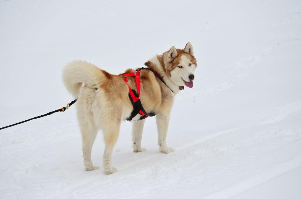 Storm's first snowshoeing trek! SnowshoeingattheRitz052