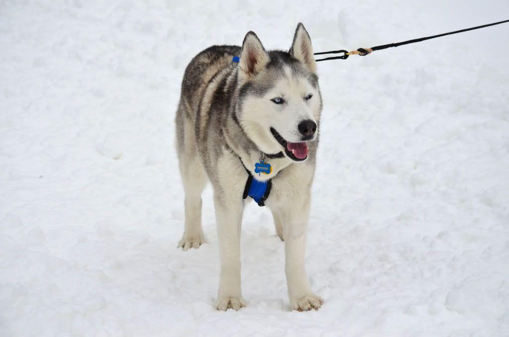 Storm's first snowshoeing trek! SnowshoeingattheRitz053