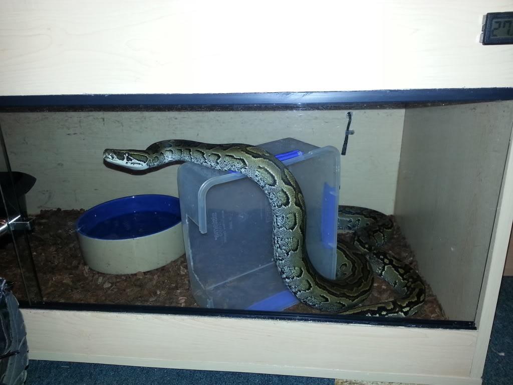 my reptile's 20130111_213813