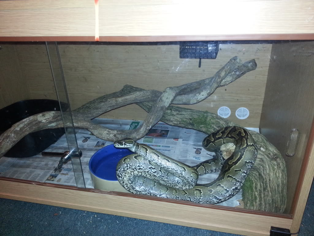 my reptile's 20130325_203738_zpscd564fe0