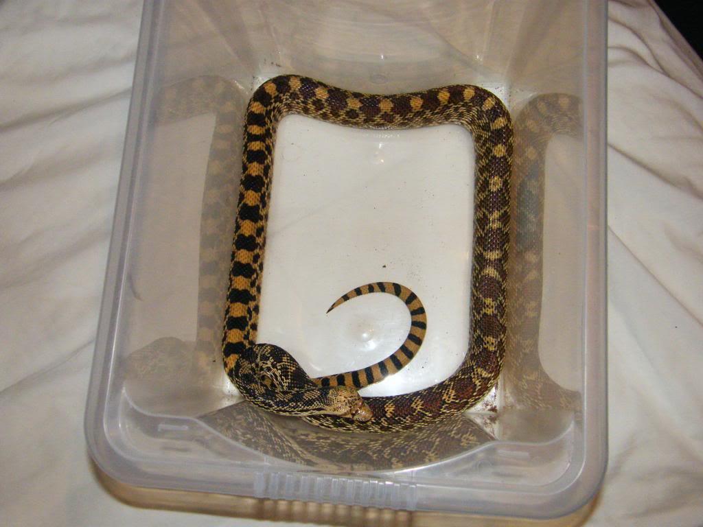 my reptile's DSCF0054