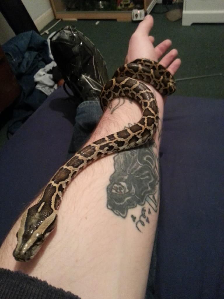 my reptile's 20121218_185606