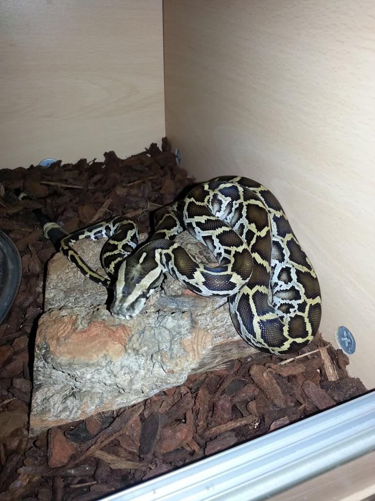 my reptile's 20130130_181408