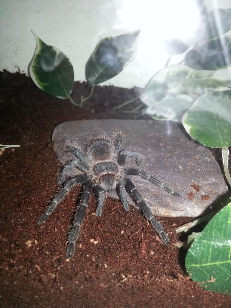 my tarantula collection 20130426_181852_zps6b0431f3