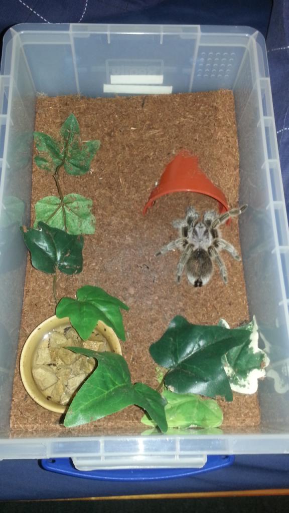 my tarantula collection Screenshot_2013-07-13-23-34-56_zps390227b4