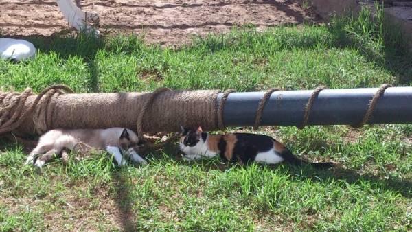 Canis Pepa  PepanJulieta_zps34993690