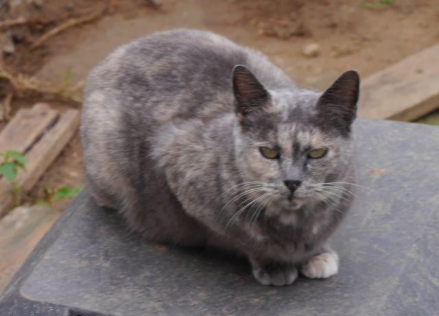 KH - Grey Grey1_zpsa805159f