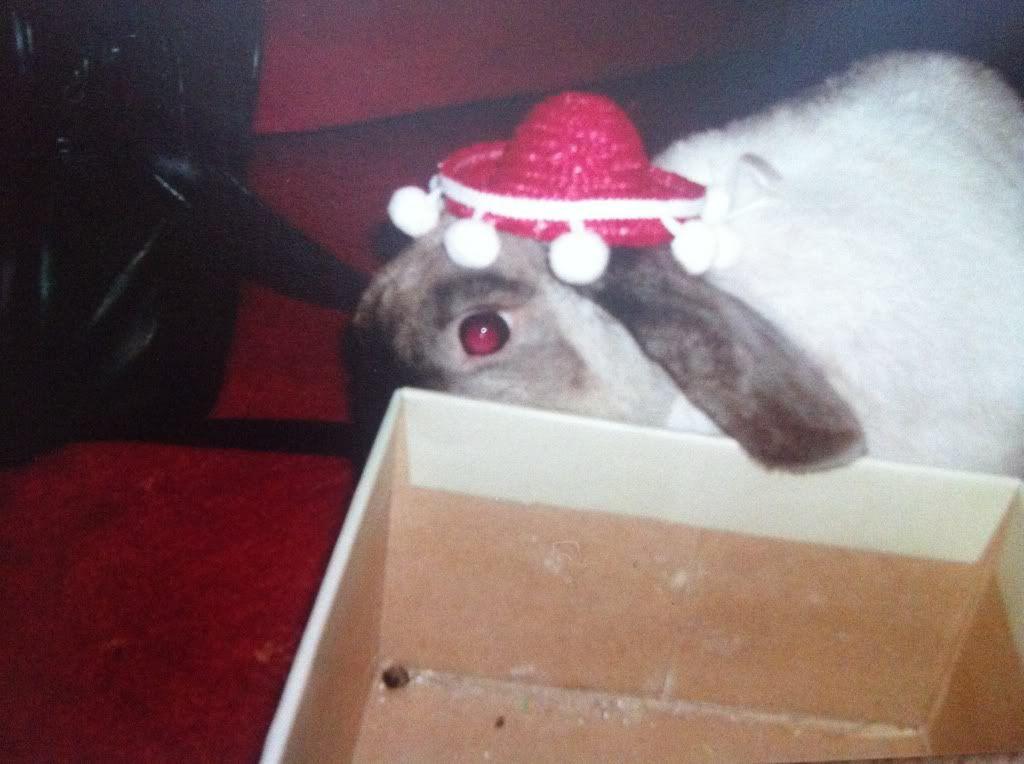 Thumper, my Bubba - Page 2 2fe3de8a
