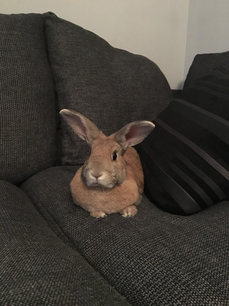 Look who was lounging on my sofa the other day  5822CA18-5CB5-4614-AFC3-27254868921D_zpsokzuccv5