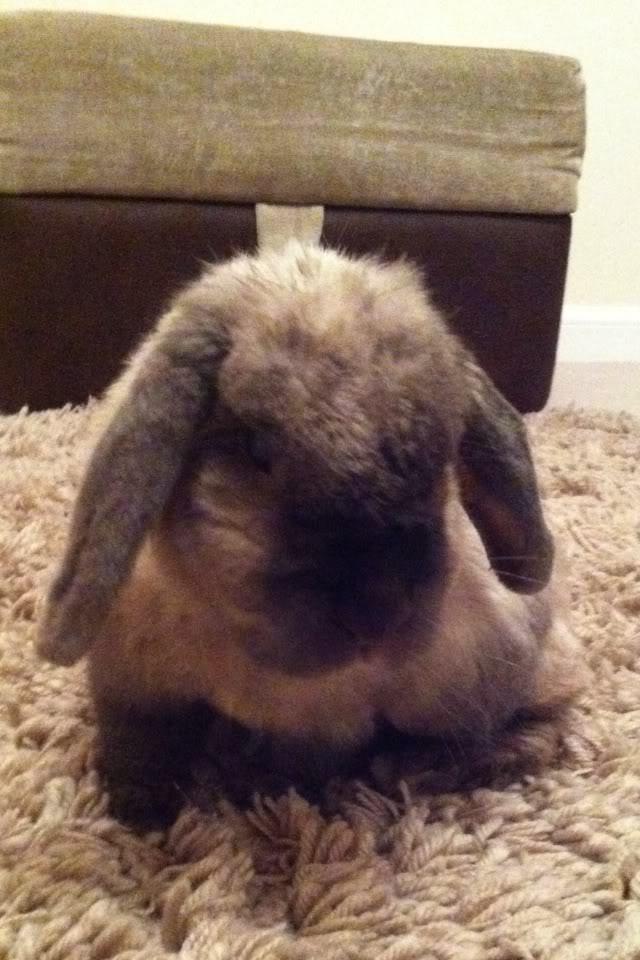 Thumper, my Bubba Cec133bc
