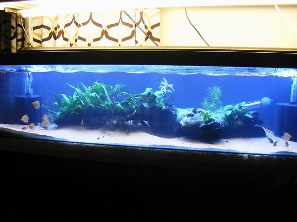 planted tank DSCF3154