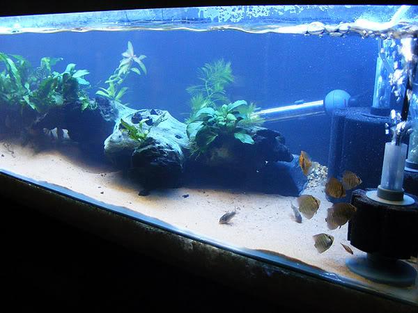 planted tank DSCF3155