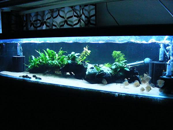 planted tank DSCF3162