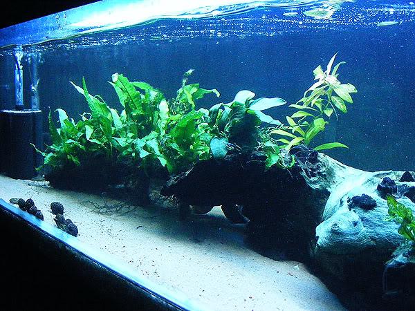 planted tank DSCF3164