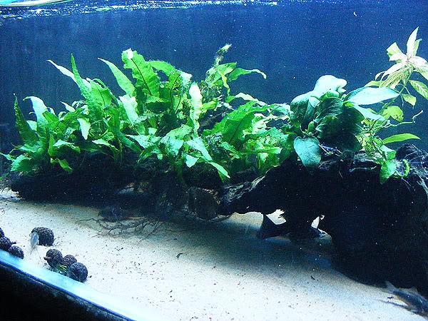 planted tank DSCF3167
