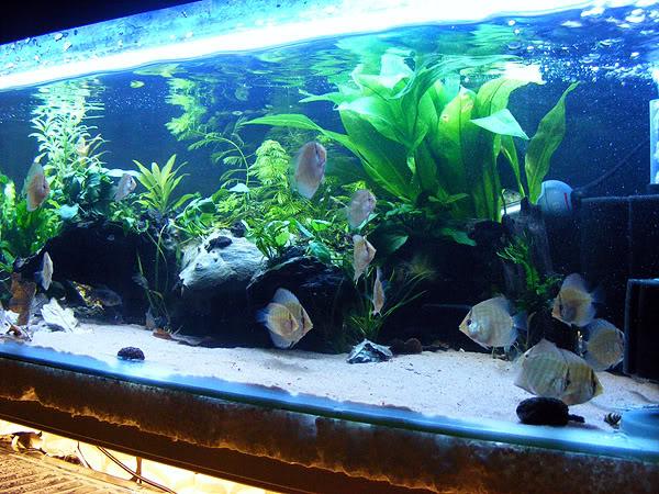 planted tank DSCF3197