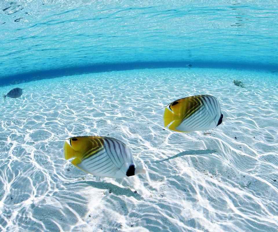 Podvodni cudesni svet Underwater_16
