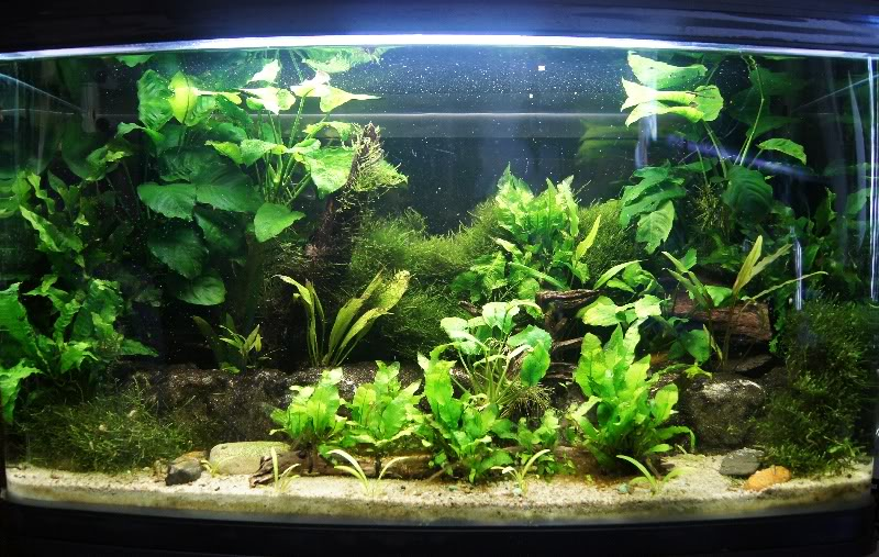2.5ft Planted tank 25ft4thApr2012