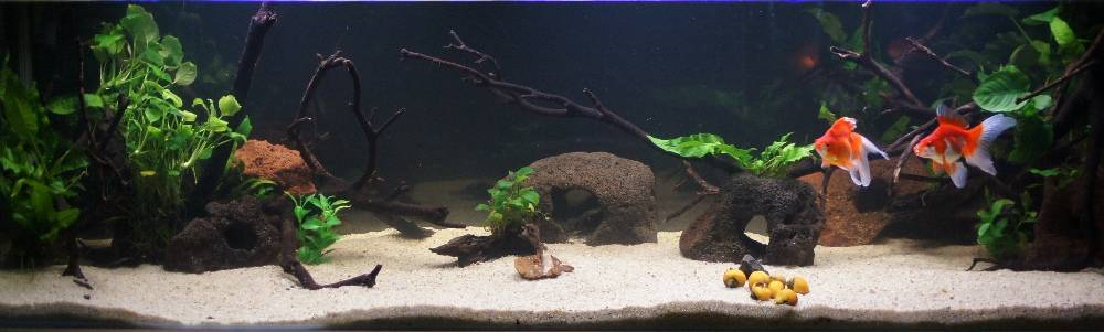 Pool filter sand 5ft13thMay2012