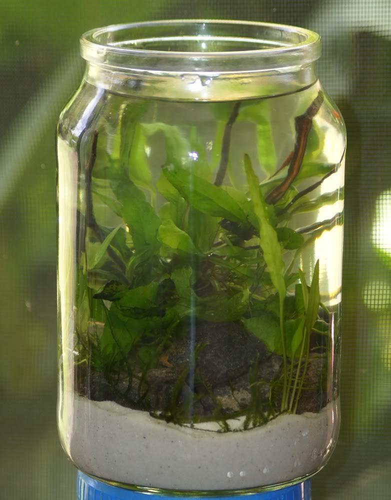 Nano Aquascape Nano19thDec2011