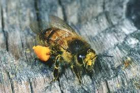 Het medicijn afkomstig van Bijen ImagesCA23CUEY