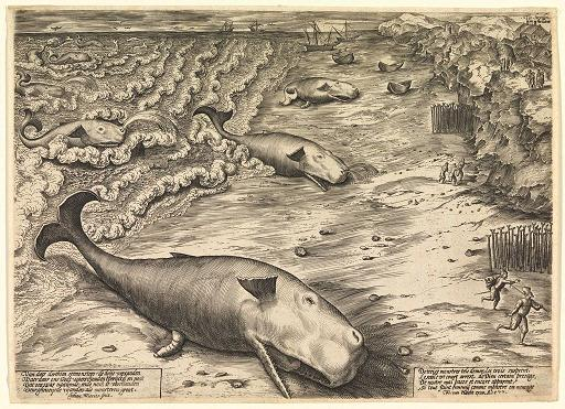 Royale Fysshe - Whales & whaling in Medieval Britain Whale%201_zpsfozkpo3e