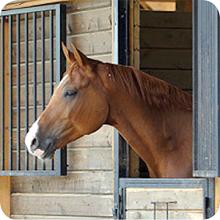 Horse Registration