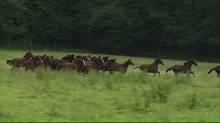 wild horse feilds